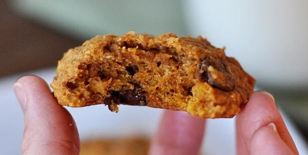a hand holding a chocolate chip pumpkin cookie with a bite taken out