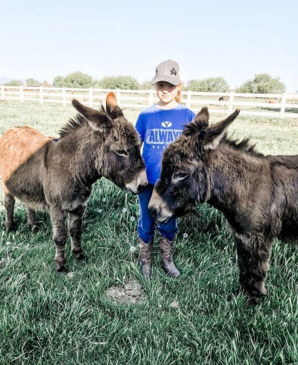 girl standing between two miniature donkeys