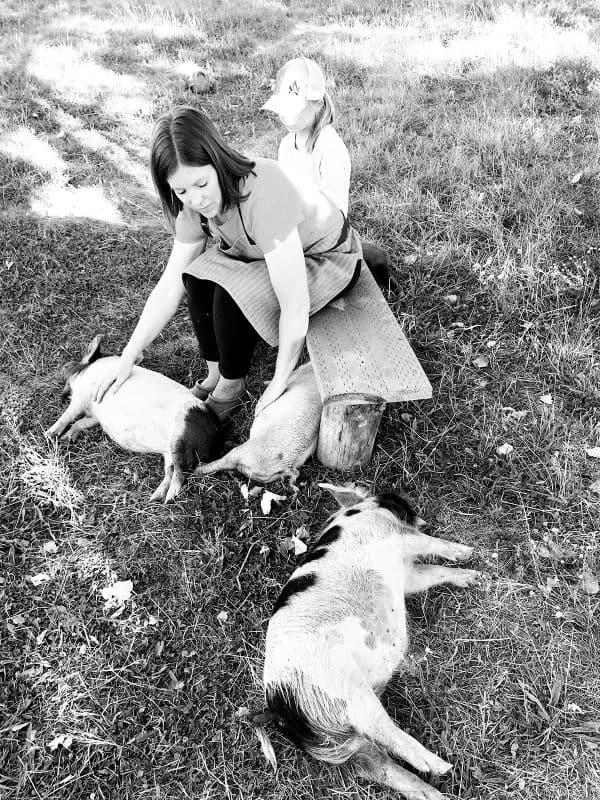 petting kunekune pigs in pasture