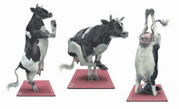 cow yoga poses