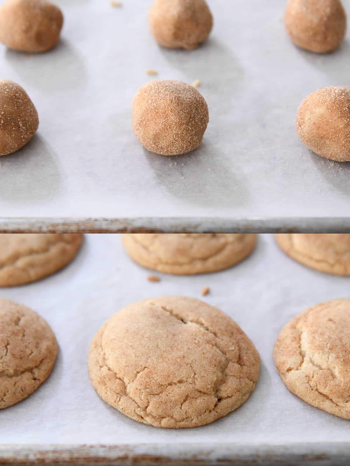 snickerdoodle ball rolled in cinnamon and sugar and baked tray of snickerdoodles