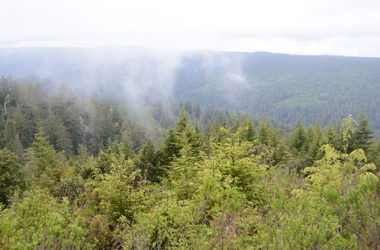 Beautiful outlook in Redwood National Forest