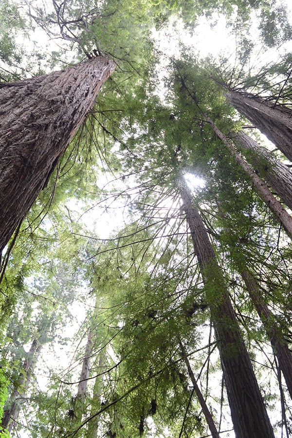 Travel Guide to the Redwood National Forest