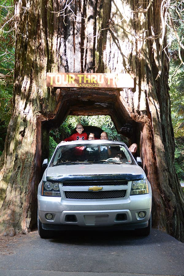 Klamath Drive Through Tree