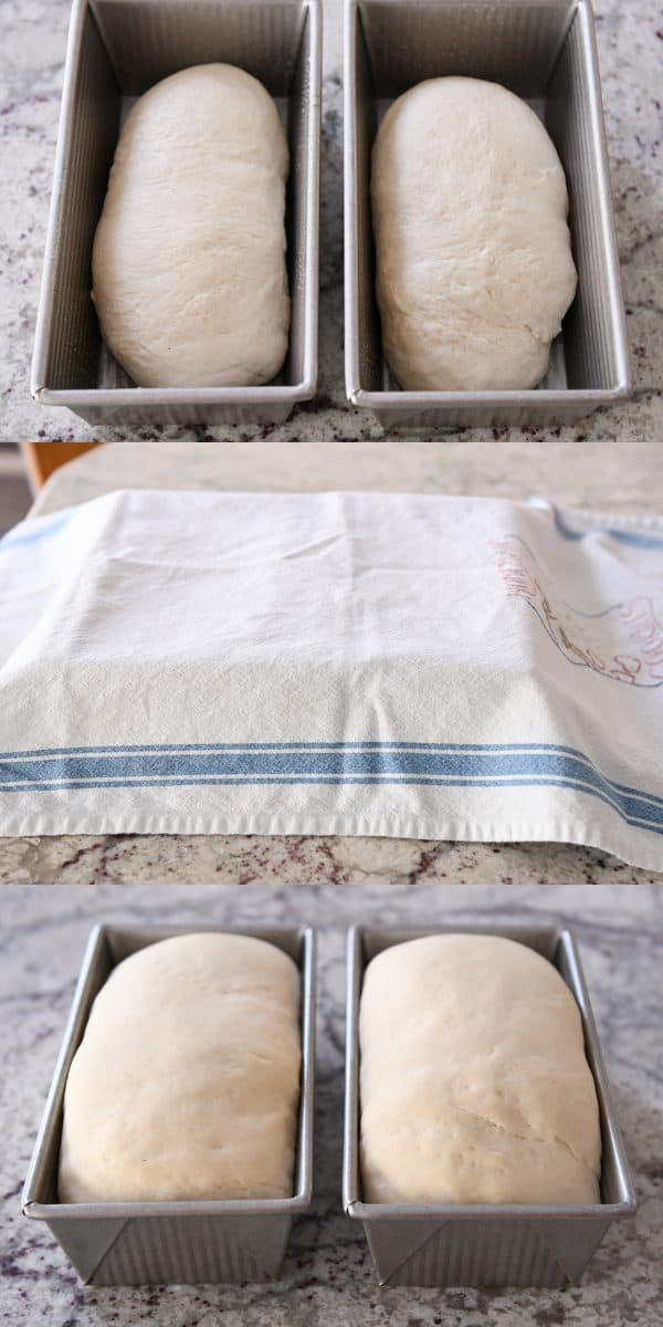 two loves of bread covered with a towel rising in bread metal bread tins