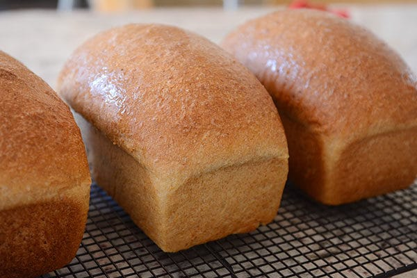 Three loaves of homemade wheat bread on a cooling rack.